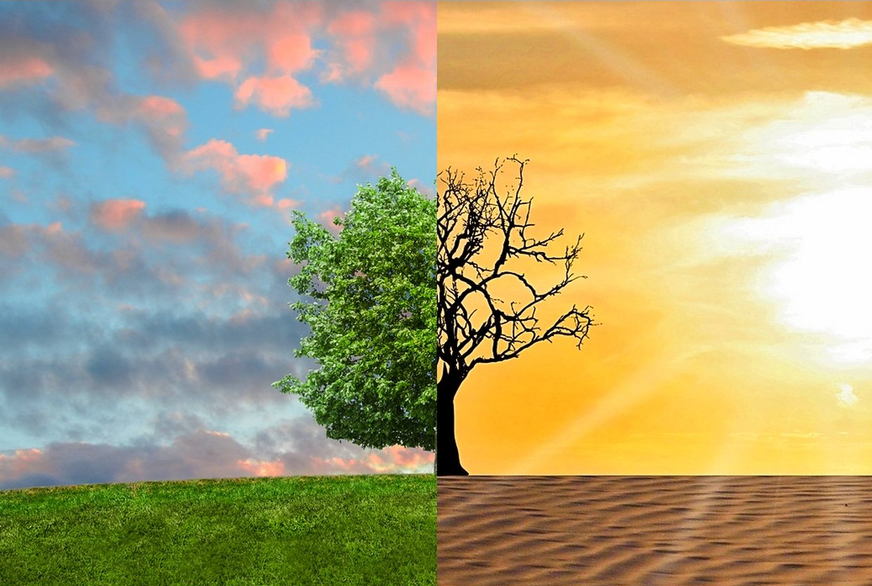 Climate change and environmental degradation | Knowledge for policy