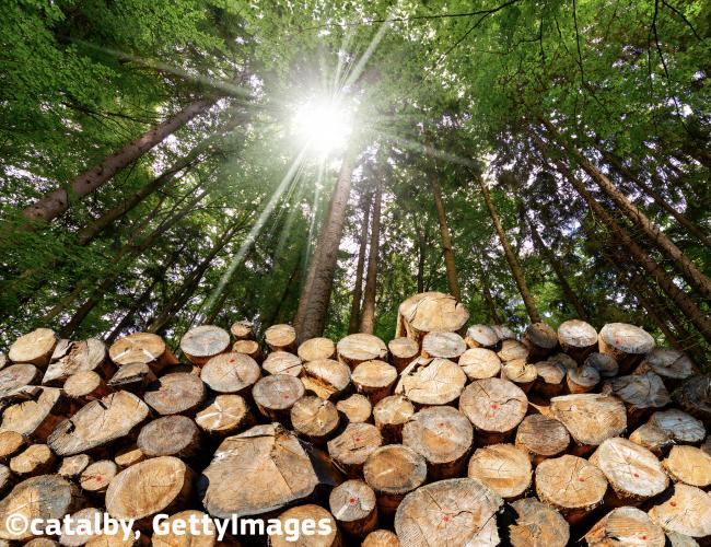 Use of woody biomass for energy